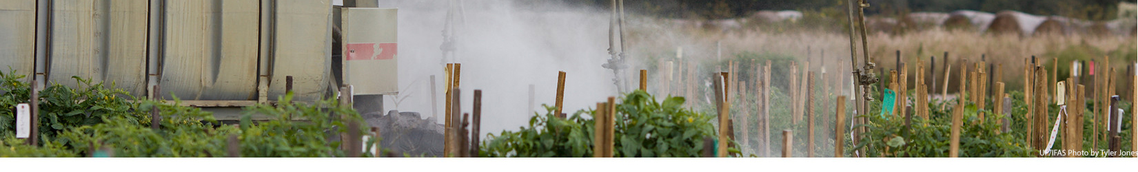 Pesticide spraying in a tomato field. UF/IFAS photo by Tyler Jones.