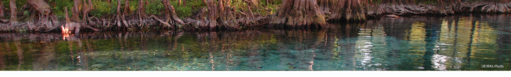Ginnie Springs photo by IFAS